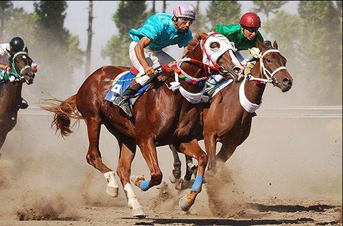 جدول مسابقات اسب دوانی چگونه است؟